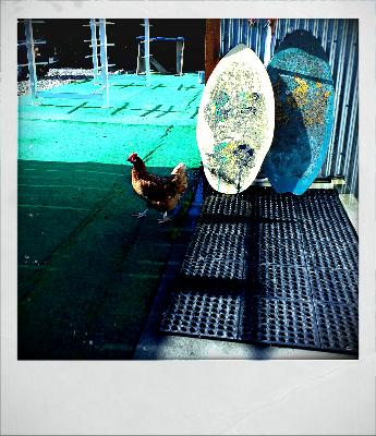 chickensummer-2011
