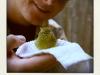 saved a bird